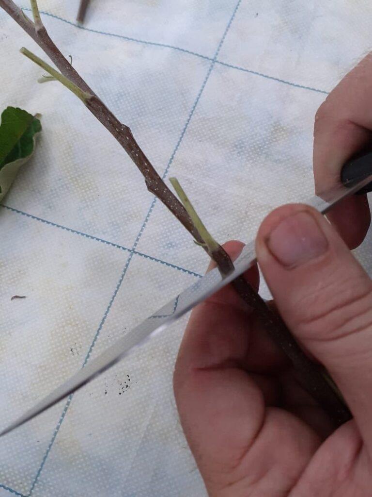 Перпендикулярно заглубляем нож в древесину. Фото автора