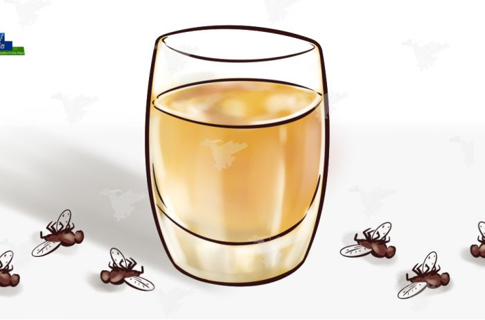 Простое домашнее средство забыть о мухах, комарах и тараканах.