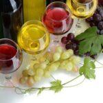 Общие понятия по виноградорству