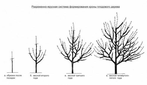 Омолаживающая обрезка слаборослых деревьев